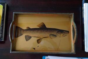 227A Trout Tray